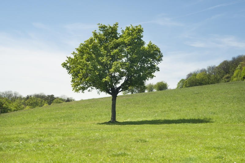 Single tree in the middle of green lawn, Kahlenberg hills, Austria