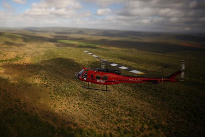 Black rhino being transported by helicopter to an awaiting land vehicle. The helicopter trip lasts less than 10 minutes and enables a darted rhino to be removed from difficult and dangerous terrain. The sleeping animals suffer no ill effect. Photo courtesy of Green Rennaisance/WWF