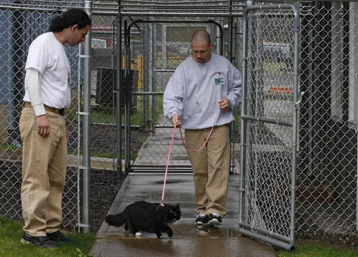 Inmates Joseph Walter, right, and ?Joseph Contreras walk Princess Natalie at Larch Correctional Facility Friday, April 20, 2012, in Yacolt, Wash.  The Cuddly Catz program at the Larch Correctional Facility, a minimum-security prison is several months old, but inmates say they've already noticed a difference in the cats and themselves. The program began in cooperation with a local animal shelter. It has grown to include two cats and four inmates, and the prison plans to add four more cats. (AP Photo/Rick Bowmer)