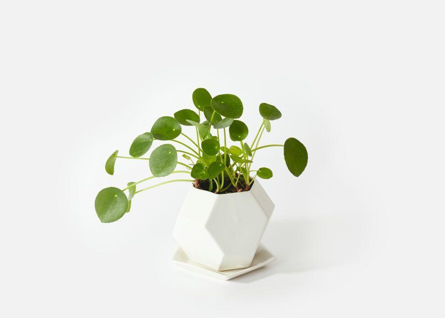 """<p><strong>Urban Stems</strong></p><p>urbanstems.com</p><p><strong>$90.00</strong></p><p><a href=""""https://go.redirectingat.com?id=74968X1596630&url=https%3A%2F%2Furbanstems.com%2Fproducts%2Fplants%2Fthe-monet%2FNF-K-00014.html&sref=https%3A%2F%2Fwww.elledecor.com%2Flife-culture%2Ffun-at-home%2Fnews%2Fg3284%2Fbest-indoor-plants-for-apartments%2F"""" rel=""""nofollow noopener"""" target=""""_blank"""" data-ylk=""""slk:Shop Now"""" class=""""link rapid-noclick-resp"""">Shop Now</a></p><p>""""This is a widely loved plant with many endearing nicknames like UFO plant, pancake plant, and Chinese money plant,"""" says Carter. """"Its love of humidity makes it a great way to add color to a bathroom. The sprouted leafy discs could also work in any space with bright indirect light. Let the soil dry out between waterings to avoid root rot. Their leaves will droop a bit when they are thirsty.""""</p>"""