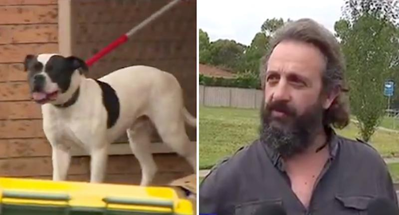 Father Karl Martig (right) praised his wife for saving his son from a neighbour's dog (left)
