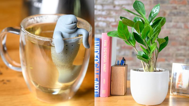Best gifts for teachers 2019: Fred & Friends Manatea Tea Infuser and The Sill ZZ Plant