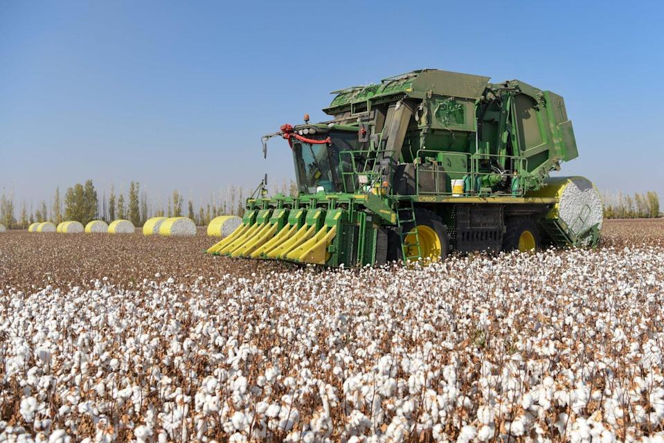 Xinjiang is the largest cotton growing region in China. Photo: Xinhua