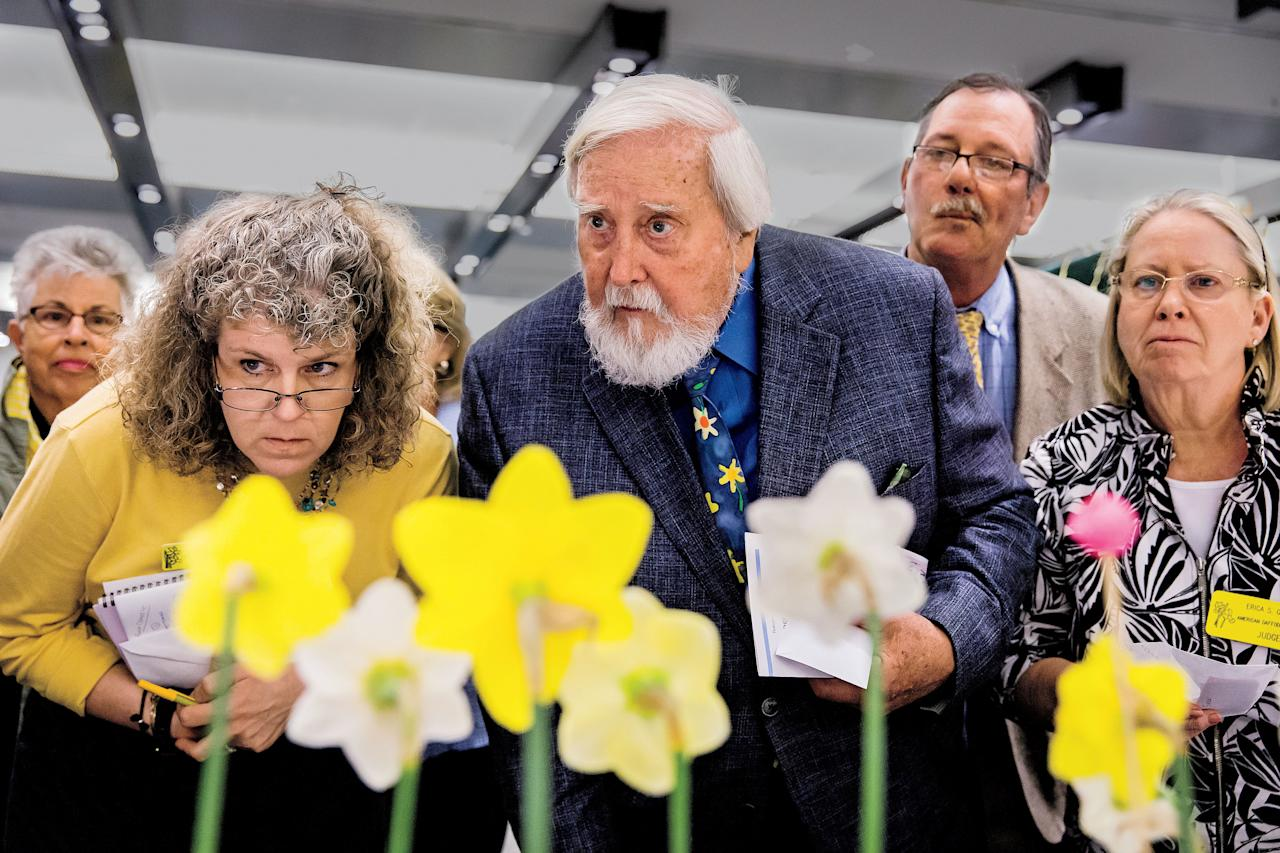 """<p><i>All blue-ribbon-winning stems receive a second round of judging by the entire panel.</i> </p> <p>""""Once you win a ribbon,"""" explains Lucy Wilson, of Martinsville, Virginia, """"you then want the bigger ribbon. Then you want the silver."""" In addition to individual honors, a particularly excellent stem or grower may receive what is referred to as a special award. In true Virginia fashion, the GCV's Daffodil Show awards are silver: bowls, cups, and trays. Unlike in my grandmother's day, winners now keep the perennial trophies for only a year.</p> <p>Ribbons are more economical, which is good because daffodil judges award many of them. """"The point is to give out ribbons,"""" says Anne Donnell Smith, an ADS horticultural judge from Stevenson, Maryland. """"If it's a good class, every entry gets a white ribbon [as honorable mention]."""" Several of the competitors I interviewed told me they won ribbons at their first show, and then they """"got hooked."""" Daffodil societies need to retain as many participants as possible.</p> <p>""""It's a shrinking world, an old-fashioned thing,"""" notes Mitch Carney, another ADS judge, of Boonsboro, Maryland. """"If you ever want to feel young in your mid-fifties, join a plant society."""" He mentors gardeners in his area, and the ADS sponsors youth-outreach programs as well.</p> <p>Still, even if ribbons are the hook, it's the community that keeps everyone coming. """"People start because they like the flower,"""" Janet Hickman, the GCV's daffodil chairman says, """"but most stay because they like the people."""" Every year, the gardeners gather excitedly, traveling from cities across the region, to bathe in their shared enthusiasm for these first flowers of spring and in their admiration for each other. As I wandered throughout the room, many of the exhibitors kept grabbing me to introduce me to their friends. """"I have been all over the world with fellow daffodil people. We're like a family,"""" says Kate Carney of Boonsboro, Maryland (who's married to Mitch).</p> <p>Daffodil"""