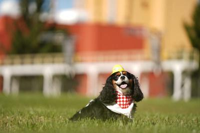 Maddie Grace, a Cavalier King Charles Spaniel, poses in front of the future home of Nestlé Purina PetCare's 22nd U.S. manufacturing facility, slated to begin operating in Eden, N.C. in 2022.