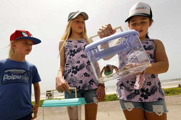 Gemma Pastor, 7, left, and Sykora Pastor, 9, look at their live pet crabs they bought at Galveston Beach.
