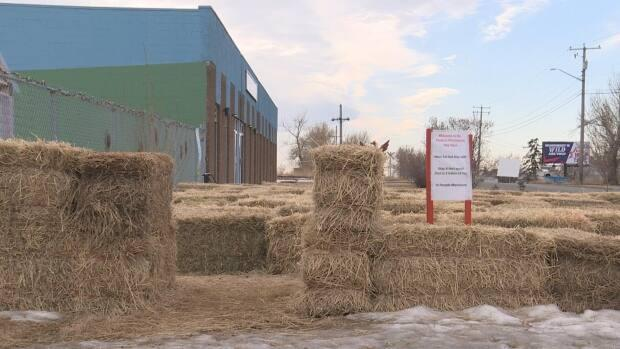The Phoenix Education Foundation School created a hay maze with the help from a grant from Parks Foundation Calgary.