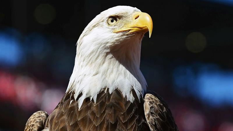 Virginia man pleads guilty to killing a bald eagle by shooting, running it over with an ATV