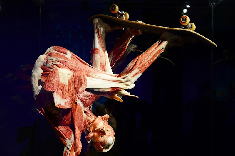 "A full body plastinate of a person skateboarding is among the exihibits at Gunter von Hagens' ""Menschen Museum"" (Human Being Museum) in Berlin (AFP Photo/John MacDougall)"