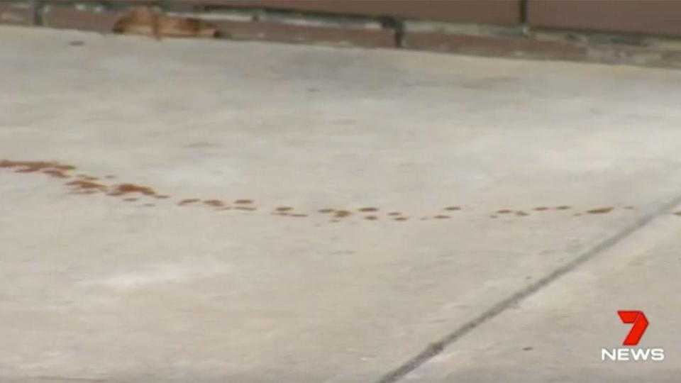 A woman left a trail of blood after running for help following a stabbing. Source: 7News