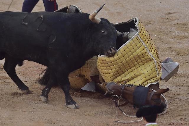 <p>A bull charges against a horse after a 'Picador' assistant bullfighter was knocked off the horse during a bullfight at the San Fermin Fiestas in Pamplona, Spain, July 9, 2017. (AP Photo/Alvaro Barrientos) </p>