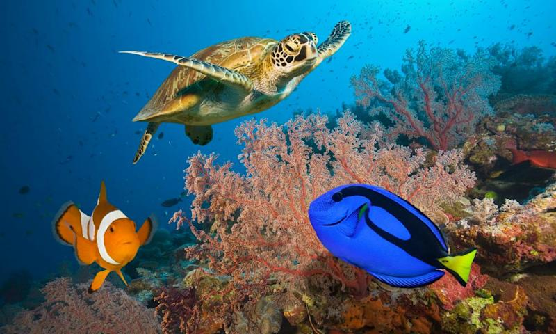 Clownfish, blue tang and sea turtle at Great Barrier Reef