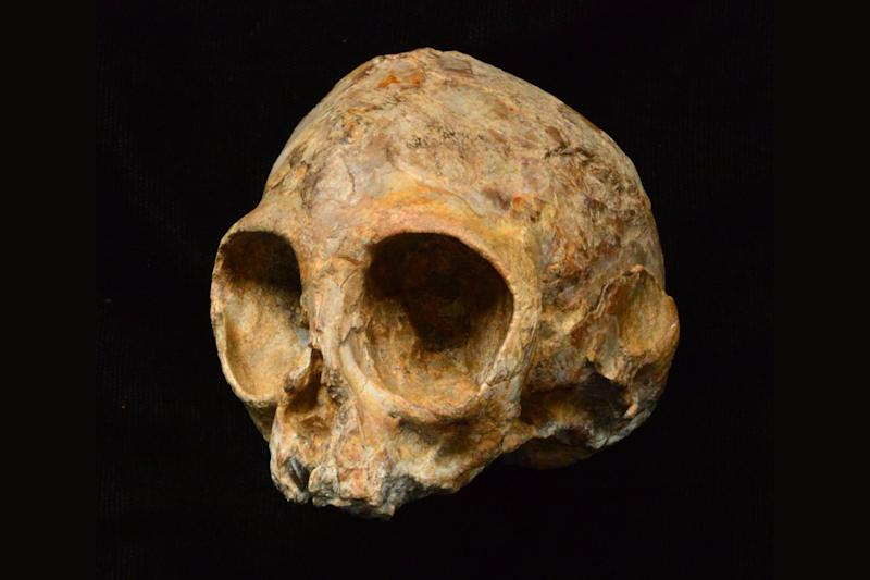 13 Million-Year-Old Skull May Reveal What Our Ancestors Looked Like