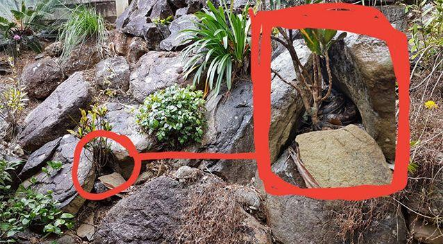 Stu posted this photo as the answer, zooming in on the area where the snake is hiding. Source: Facebook