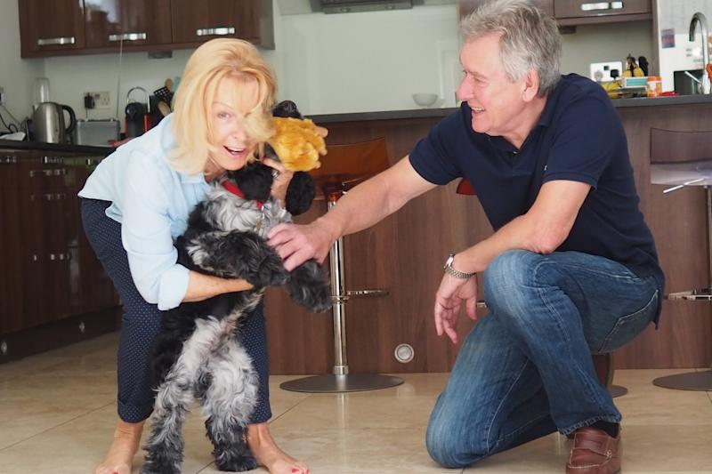 Angela Laws pet-sitting overseas. Source: Provided