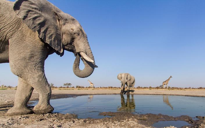 'In many parts of Africa, you're more likely to bump into an elephant than another human' - Getty
