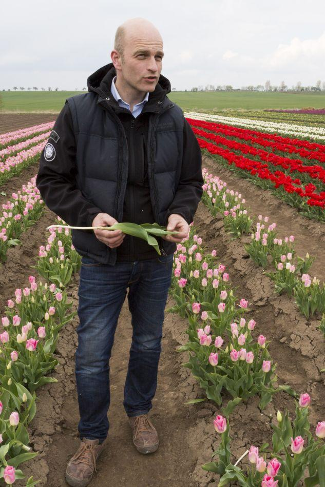 Benedikt Sellmann, co-owner of a tulip farm, stands amidst his blossoming tulips.