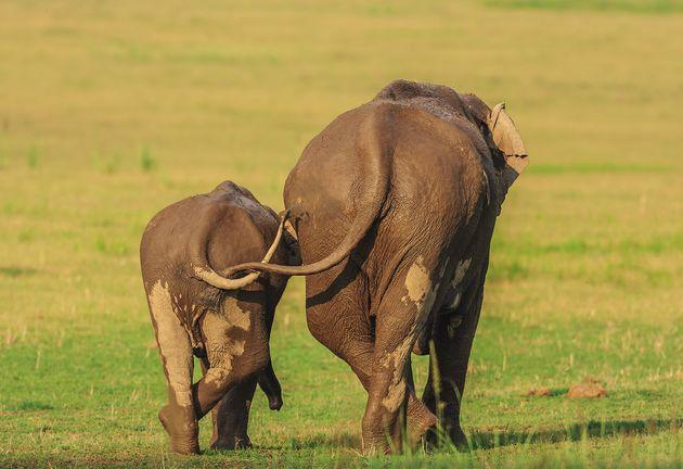 """""""Like Mother Like Daughter"""" features two Asian elephants at Corbett National Park in India."""