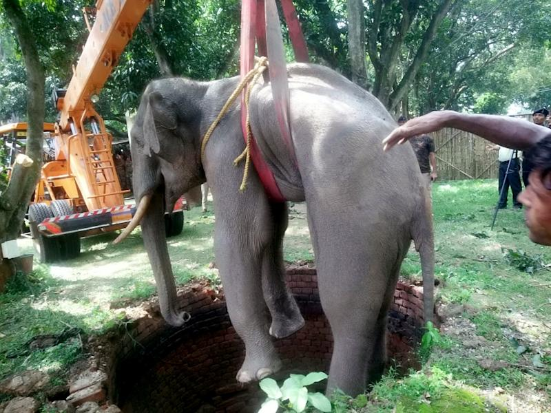 Elephant Stuck in 20-Foot Well Rescued with a Little Help from a Big Crane