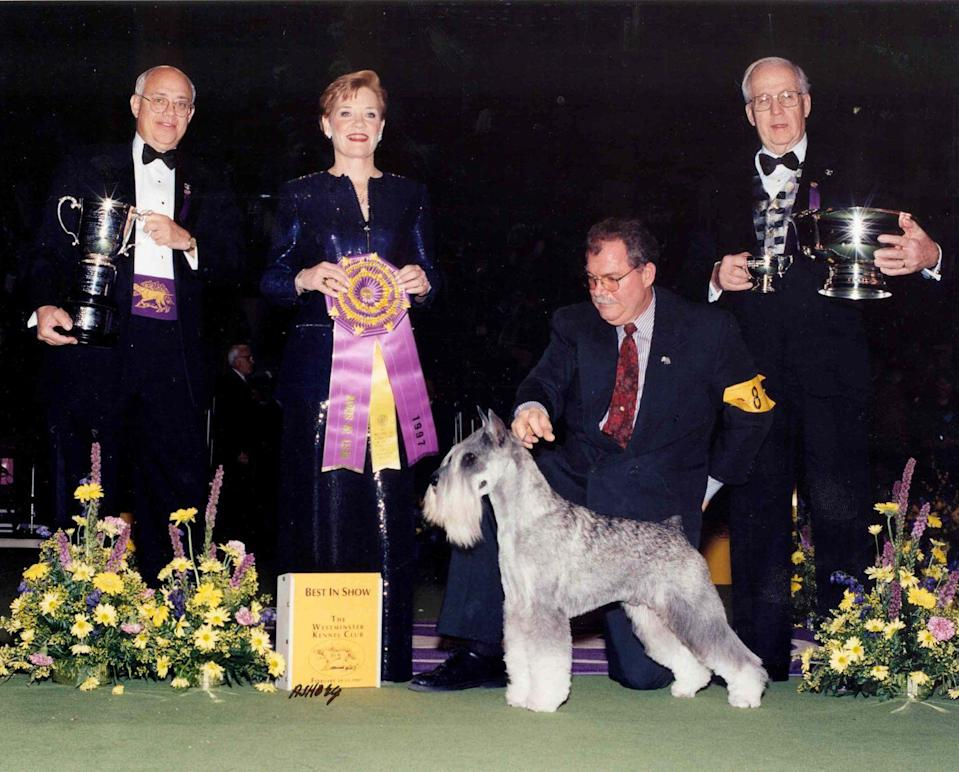 <p>There's nothing average about this standard schnauzer named Parsifal Di Casa Netzer—especially its name.</p>