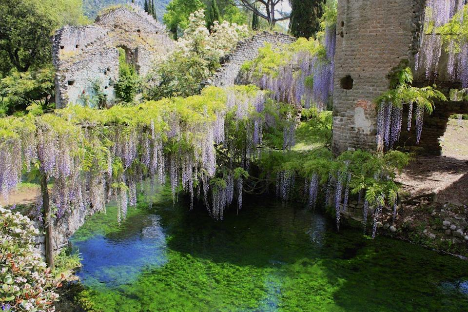 <p>Built on the ruins of the eponymous medieval town, the Gardens of Ninfa are truly a sight to behold. Two hundred years after the town was destroyed, the gardens began to be constructed and have continued to be a passion project of locals for more than 400 years. An Anglo-Saxon garden was built in the 18th century, and the baronial palace was restored, offering us the gardens as we know them today. </p><p>The Gardens of Ninfa boast 1,300 botanical species over the eight-acre property with everything from cherry blossoms to avocado trees. The property rests aside a nearly 2,000-acre oasis, created in 1976 to protect local fauna, including 152 species of birds. Whether you're seeking romance, ruins, or some bird-watching, Gardens of Ninfa will offer an unparalleled experience. </p>