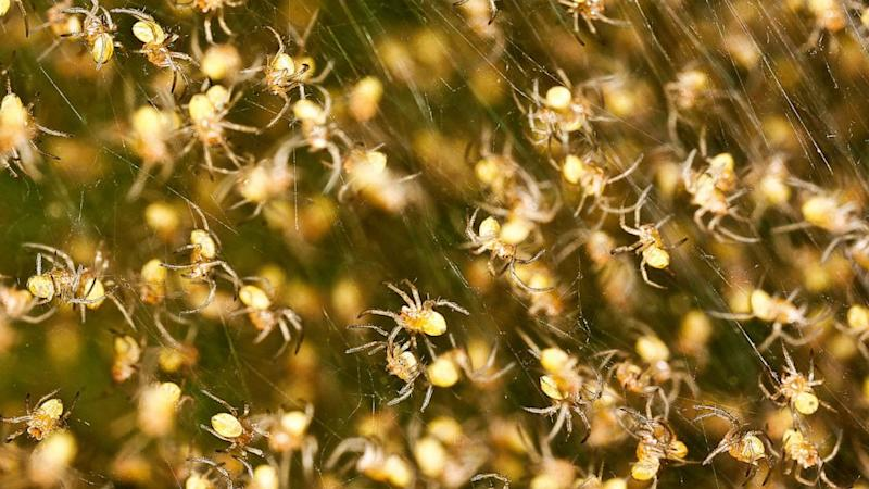 Happy Early Halloween: Dallas Tangled in Flying Spider Webs