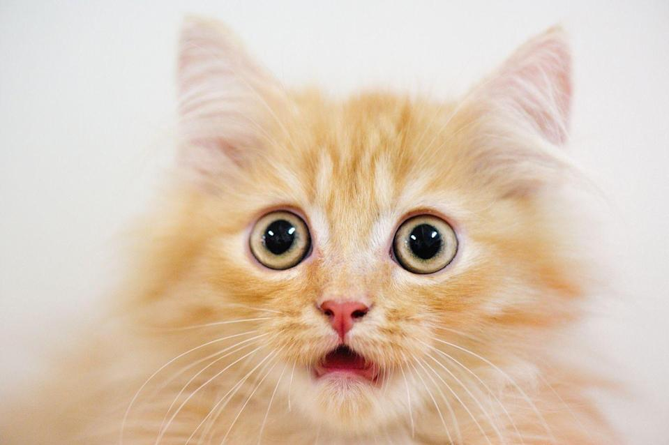 <p>Adventurous eaters in Mississippi should be forewarned — selling the meat of a cat for food is definitely not legal. We think felines throughout the state would agree, that's a good one to follow.</p>