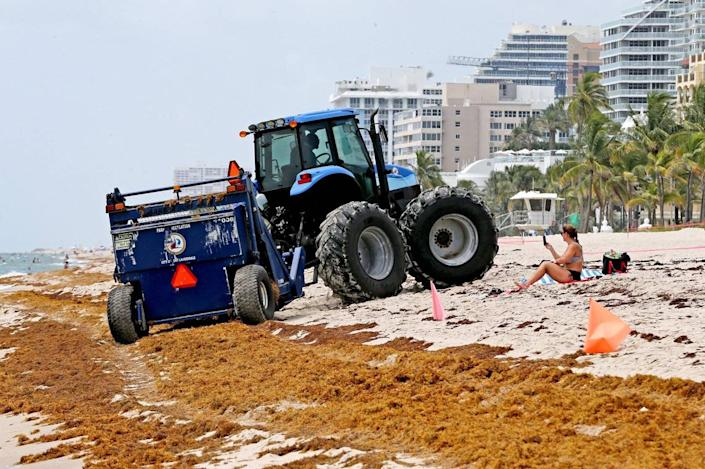 In Fort Lauderdale, a tractors mixes seaweed with the sand but cleanup efforts are not enough to clear the beach of the smelly sargassum.