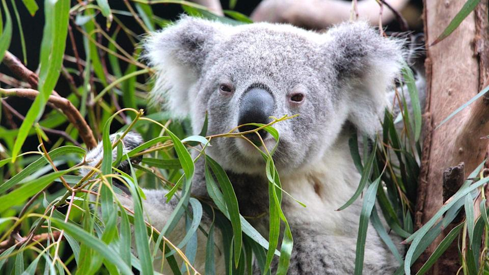 <p>If you love animals, you need to check out <span>Koalas and Kangaroos. Get to know Australia's Cuddliest Critters</span> ($59). This experience is great for the whole family.</p>