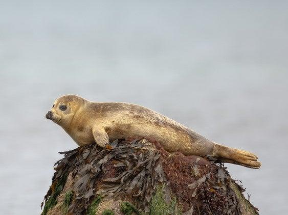 A seal at Flamborough Head in East Yorkshire (Getty Images/iStockphoto)