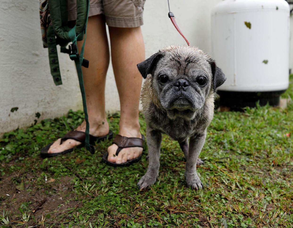 A wet dog waits with his owners as they await rescue from rising flood waters in the aftermath of Hurricane Florence in Leland, North Carolina, U.S., September 16, 2018.
