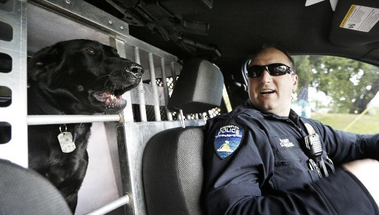 In this photo taken Thursday, May 30, 2013, drug-sniffing police dog Dusty sticks his head into the front seat as handler Officer Duke Roessel patrols in Bremerton, Wash. The newest drug-sniffing dog on the police force in Bremerton, near Seattle, is one of a few police dogs in Washington state that are not trained to point out pot during searches. Other police departments are considering or in the midst of re-training their dogs to ignore pot as well, part of the new reality in a state where voters last fall legalized marijuana use. (AP Photo/Elaine Thompson)