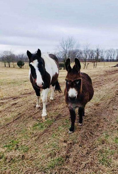PHOTO: Violet the miniature donkey and Raz, a blind horse on an Arkansas farm. Violet helps animals on the farm including a horse named Raz, who is blind. (Robbin Plumlee)