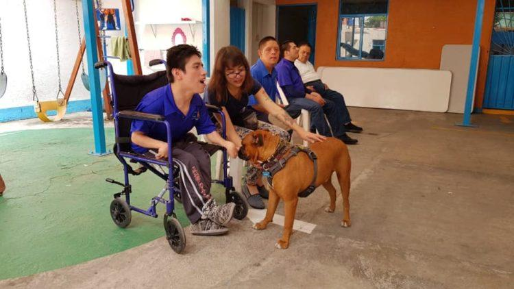 woman training dog assisted therapy
