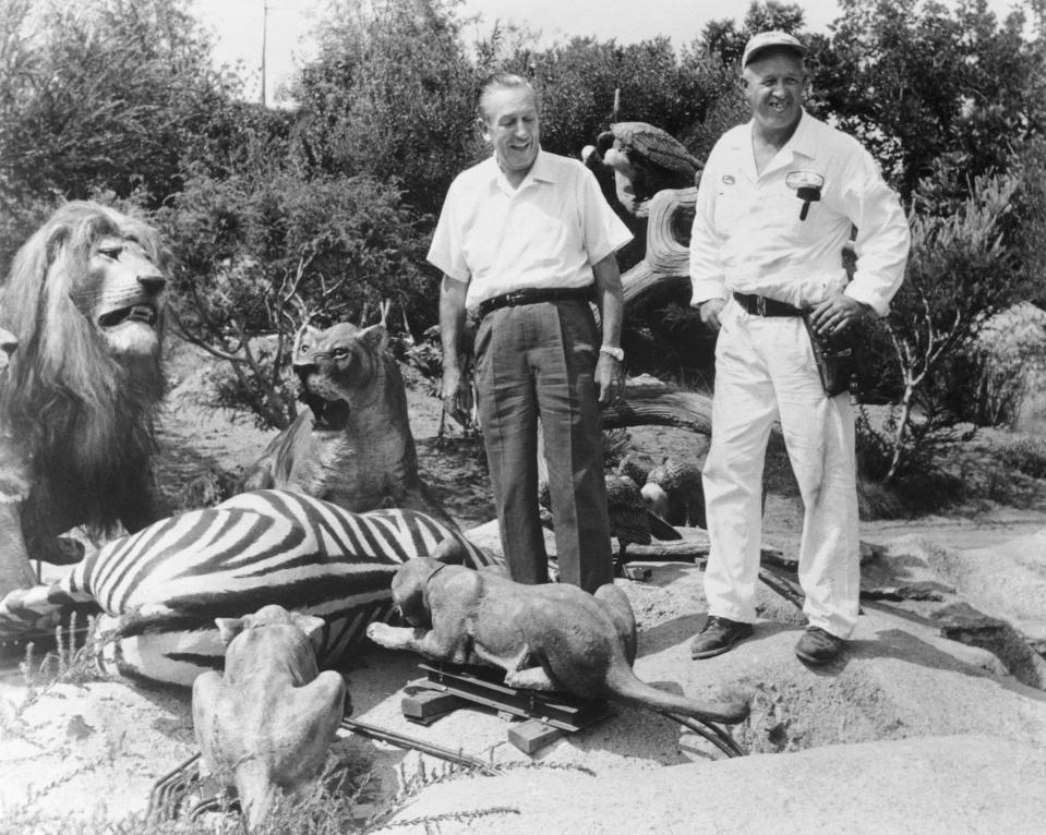 Walt Disney and park engineer and repairman Louie Francuz inspect the new African Safari area of Disneyland's Jungle Cruise Ride. Each Animatronic model is checked for realism.