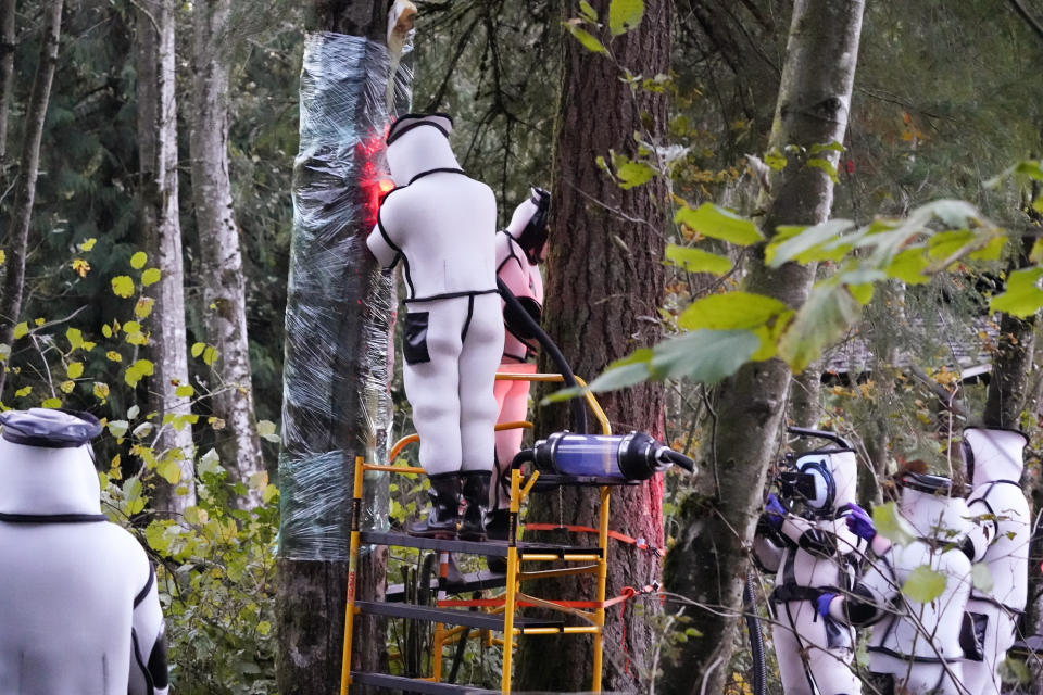 Washington State Department of Agriculture workers work to vacuum a nest of Asian giant hornets from a tree Saturday, Oct. 24, 2020, in Blaine, Wash. Scientists in Washington state discovered the first nest earlier in the week of so-called murder hornets in the United States and worked to wipe it out Saturday morning to protect native honeybees.   (AP Photo/Elaine Thompson)