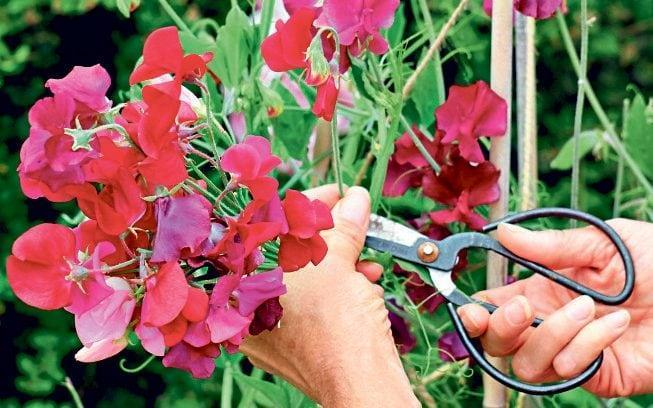 easy garden jobs to do now summer - Alamy Images