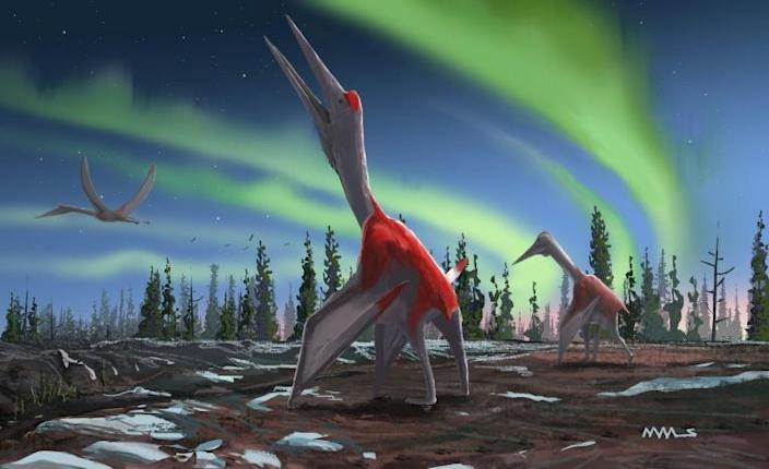Artist's impression of a Cryodrakon boreas, a newly discovered species of pterosaur (AFP Photo/David MAAS)