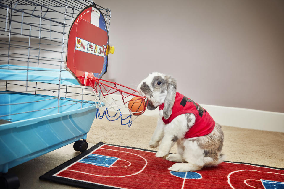 <p>Bibi the bunny completed this world record, with seven slam dunks achieved in one go. (PA) </p>