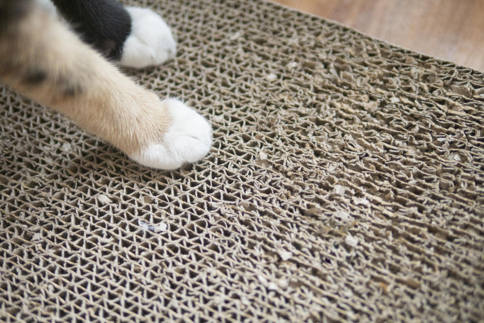 Cat paws on cat's toy scratch carton board for sharppening their nail with copy space