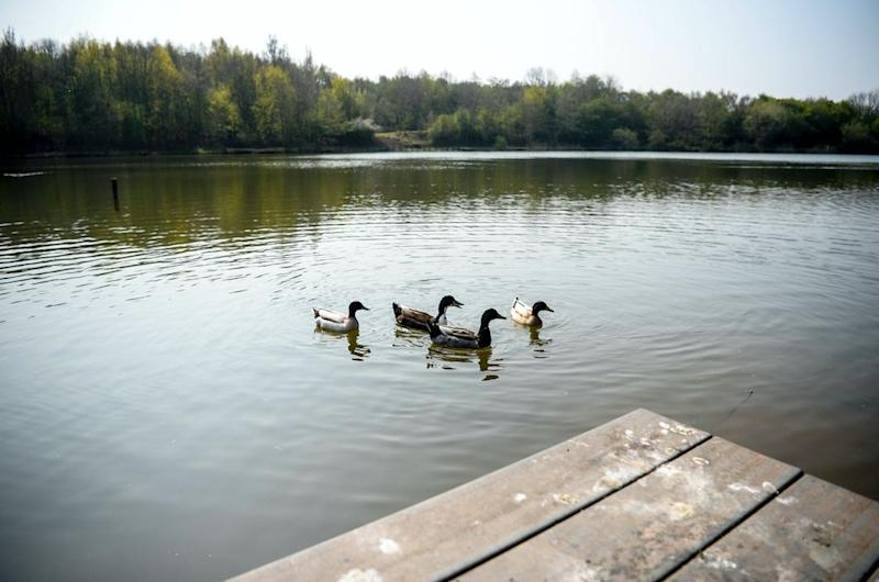 Locals at the Martinwells Lake say they have noticed a reduced number of ducks and fish at the lake (SWNS)