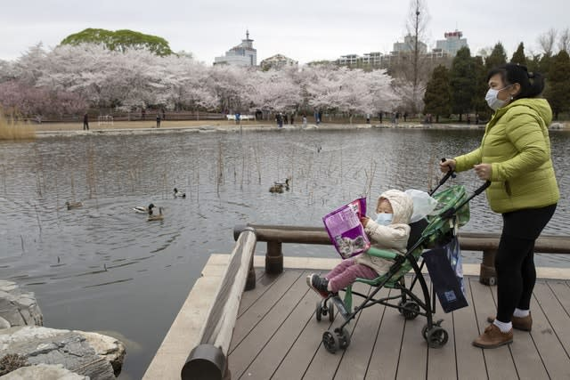 A woman pushes a child on a pram across from cherry blossoms at the Yuyuantan Park in Beijing