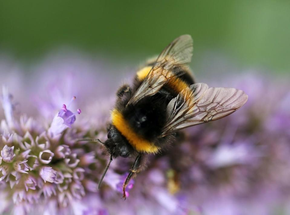 Buzzing with ideas to keep pollinators and plants thriving
