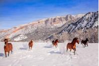 <p>Even the horses love to frolic in the snow in Colorado. </p>
