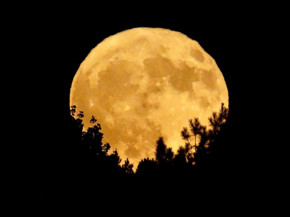 The full moon on 30 November 2020 is known as the Beaver Moon (Getty Images/iStockphoto)