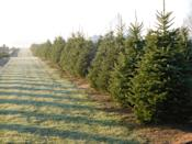 """<p><strong>New Lyme, Ohio</strong> (Starting November 29)</p><p>Cut your own tree with the family at <a href=""""https://www.facebook.com/MannersChristmasTreeFarm"""" rel=""""nofollow noopener"""" target=""""_blank"""" data-ylk=""""slk:Manners Tree Farm"""" class=""""link rapid-noclick-resp""""><strong>Manners Tree Farm</strong></a>, and then take a ride on a horse-drawn carriage. If you're still looking for more, there's a fireplace and music to help you get into the holiday spirit.</p>"""