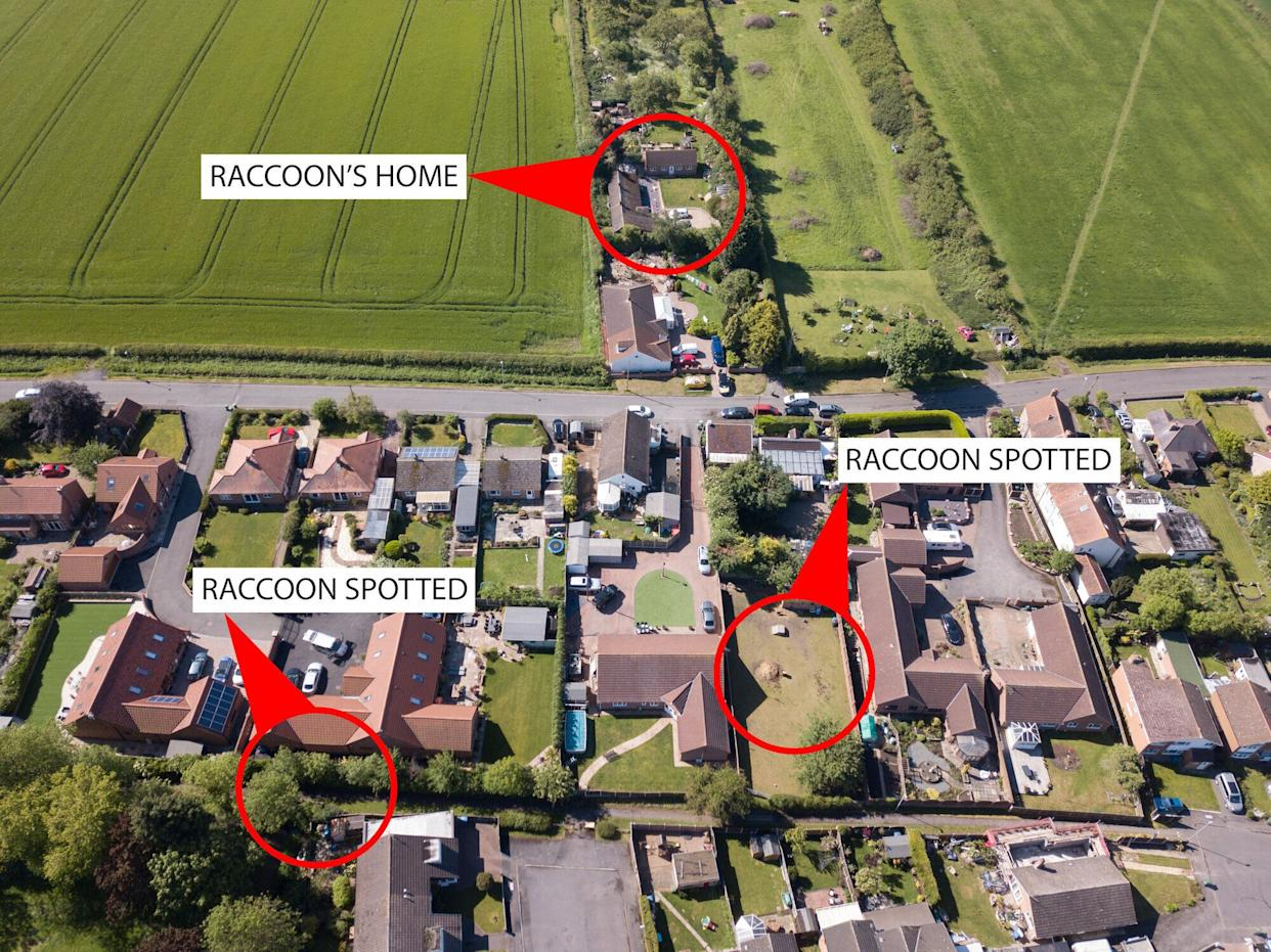 A map showing where the dogs attacked and where they escaped from. (SWNS)