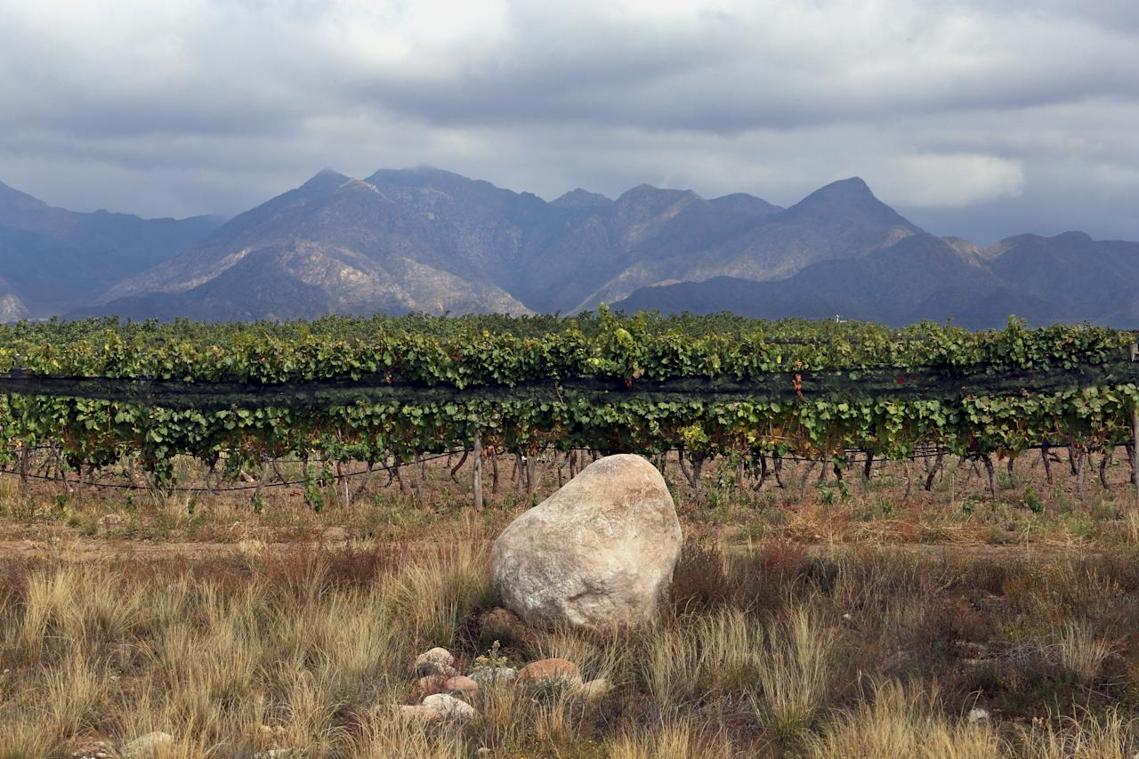 <strong>1er</strong> - Zuccardi Valle de Uco / Argentine