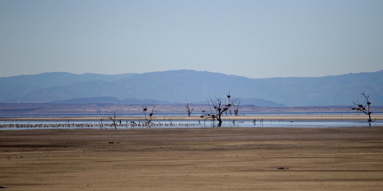 In this Dec. 27, 2010 photo, birds gather on a small spot of water surrounding trees supporting heron nests in the midst of the blight that has become Southern California's Salton Sea. The evaporating Salton Sea is the flashpoint for the latest dispute in California's water wars, testing an uneasy alliance that has sought to wean the Golden State from overreliance on Colorado River water.