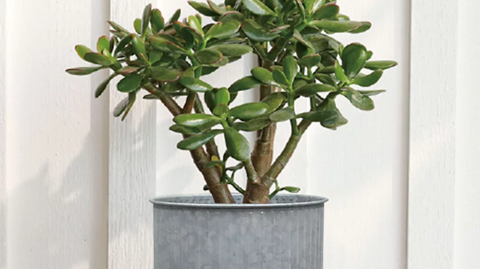 The right planter can change your space's whole aesthetic.